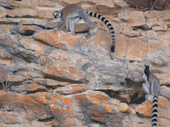 Journal Madagascar Conservation & Development, Vol8|Iss2