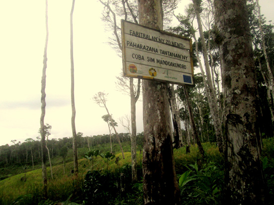 Forest fragmentation and livelihood systems, Manompana forest corridor, Madagascar
