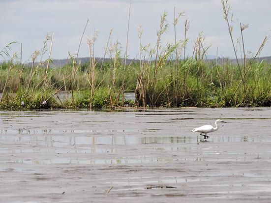 Marsh belt of Lake Alaotra, photo by Nadiah Manjato, Madagascar Conservation & Development